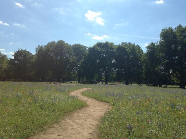 歩いて5分のところにあるロンドンフィールズには去年の夏に続けて人口お花畑が現れた。