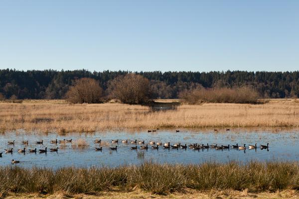 ワシントン州オリンピア近郊の野鳥保護地区公園